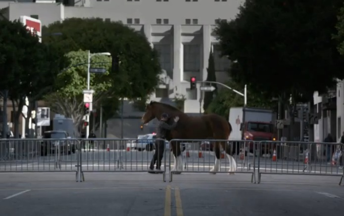 Budweiser - Clydesdale abrazo