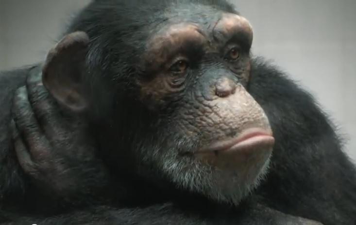 La realidad de un mono de ficción, según Peta - Marketing Directo