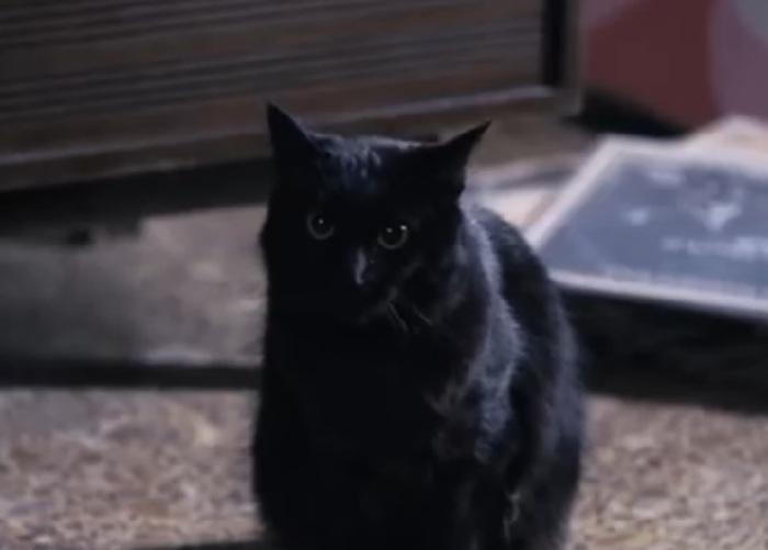 Cat Chow- gato negro
